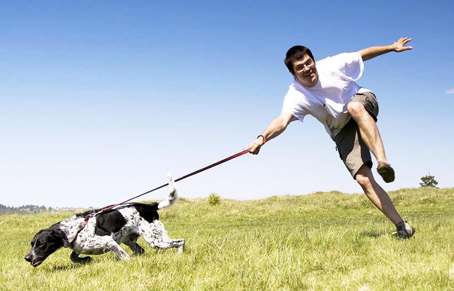 Как сделать чтобы собака не тянула поводок на прогулке