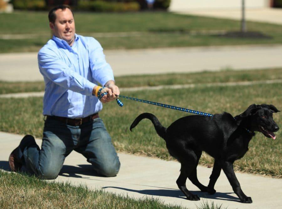 Что делать если собака тянет поводок - советы кинолога