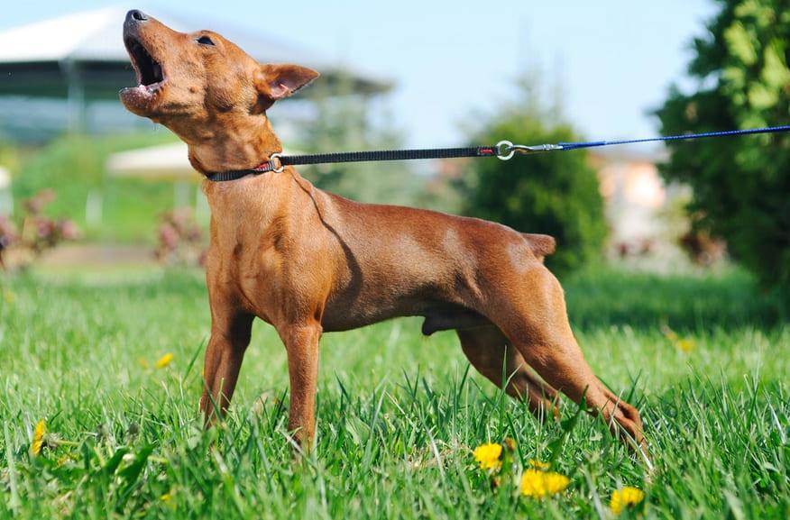 Советы как отучить собаку лаять на всех подряд