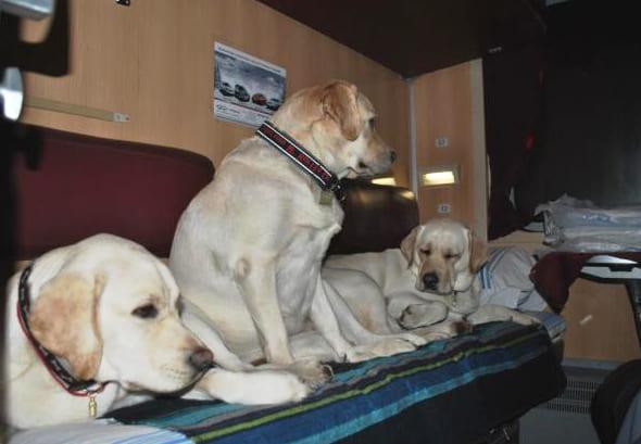 Перевозка больших собак в поезде