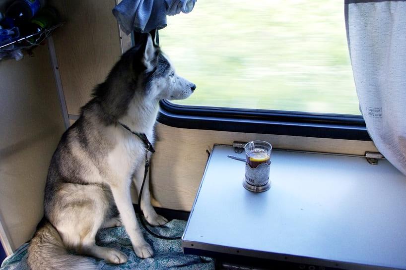 Документы для перевозки собак в Украине