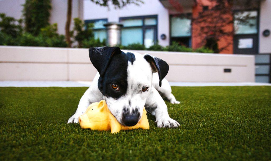 Основні правила дресирування собак