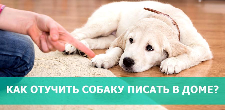 Как отучить собаку писать и гадить в доме